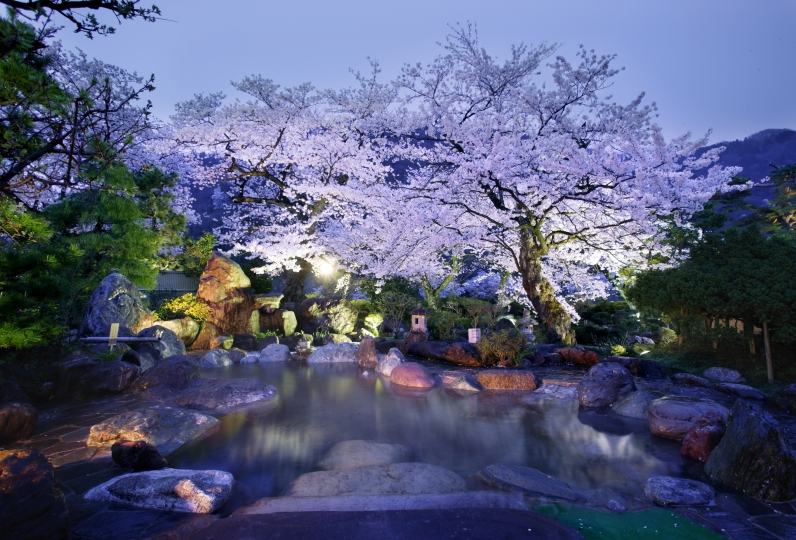 Enjoying the blossoms from your room's window.