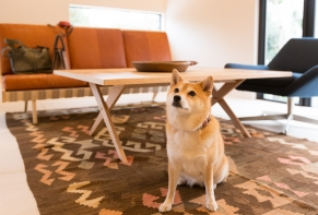 Pet-friendly Vacation Homes